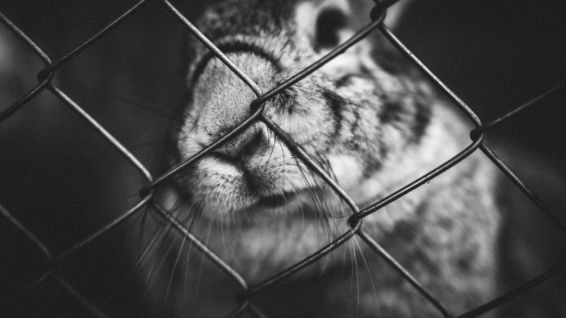 Muito ajuda os animais quem não fala besteira em nome deles
